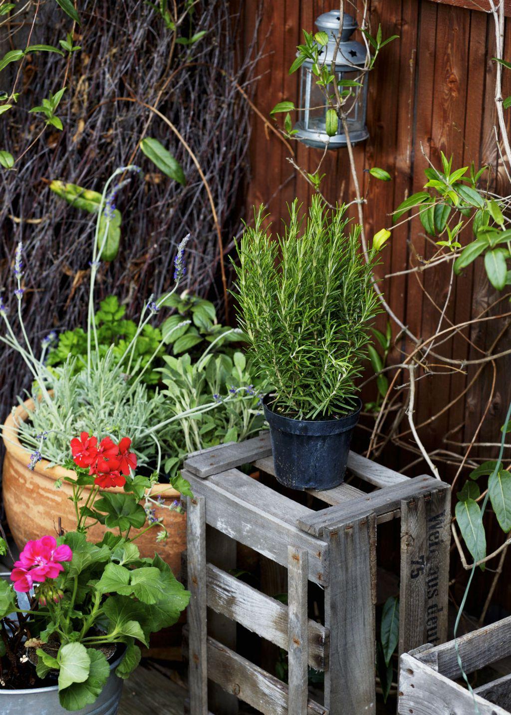 Nađite mjesta i za začinsko i ljekovito bilje