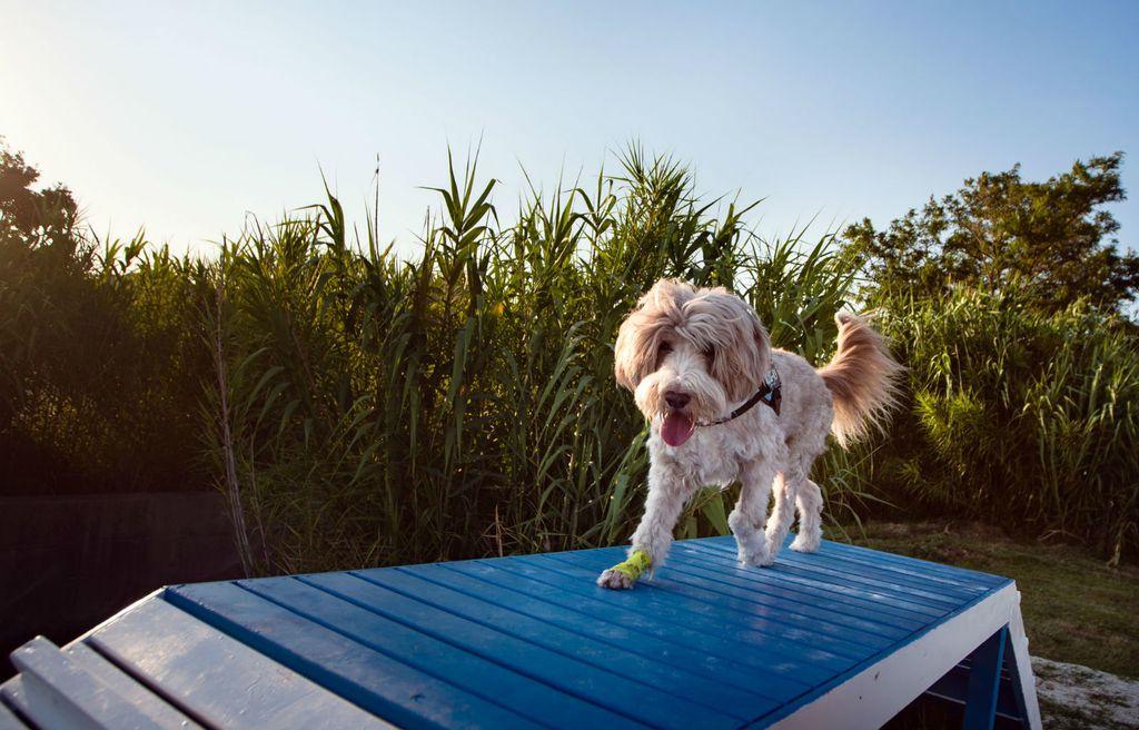 U utrci će sudjelovati psi i njihovi vlasnici