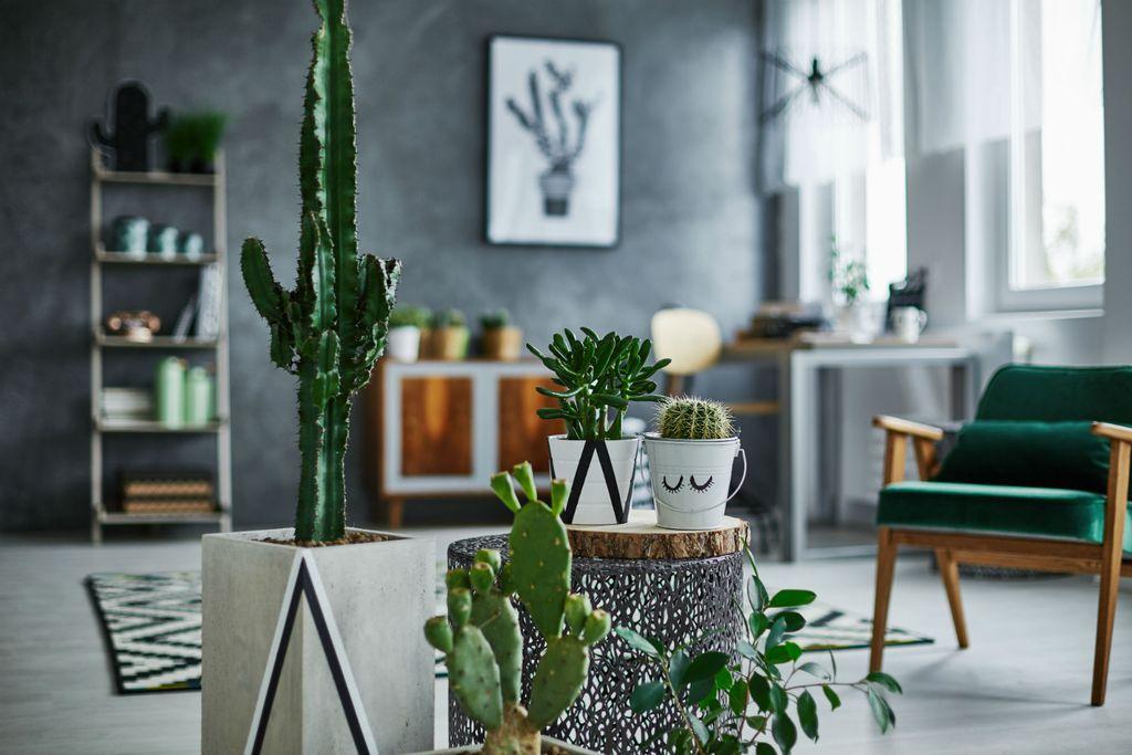 Biljke su odličan dar, pogotovo kao dar za useljenje u novi dom