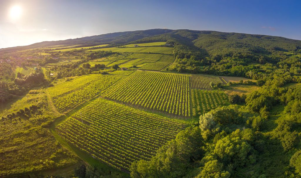Vinogradi Kutjevo