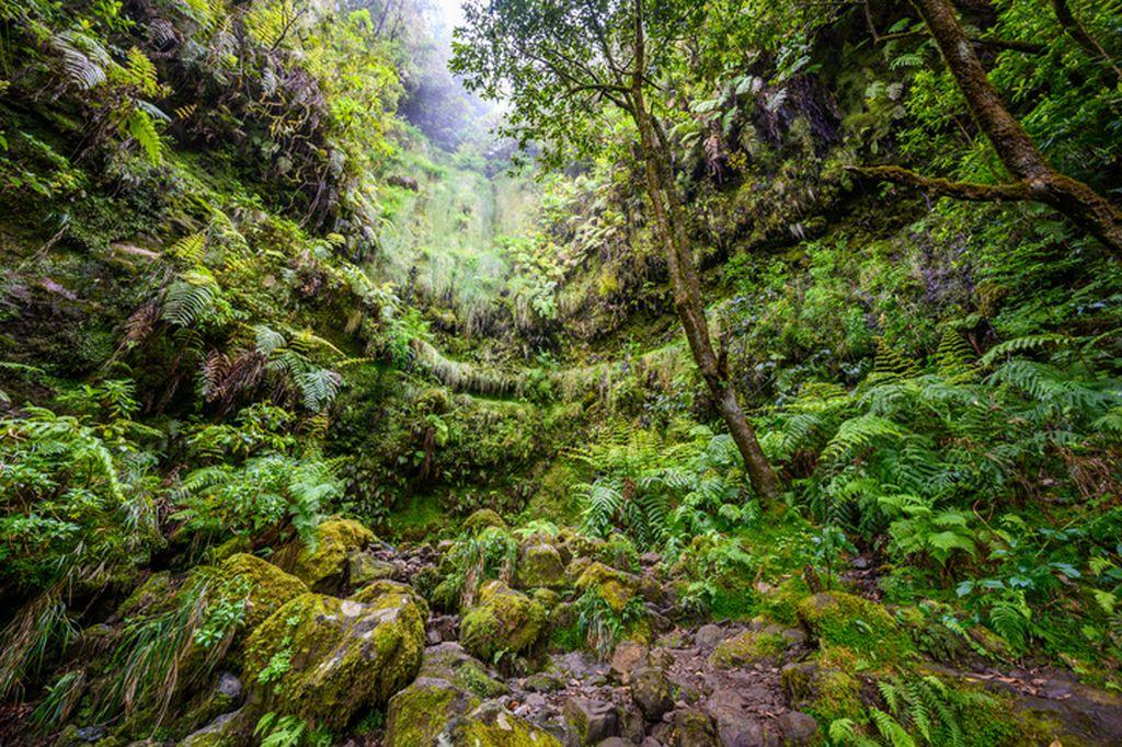 Parque Florestal das Queimadas, Madeira - 3