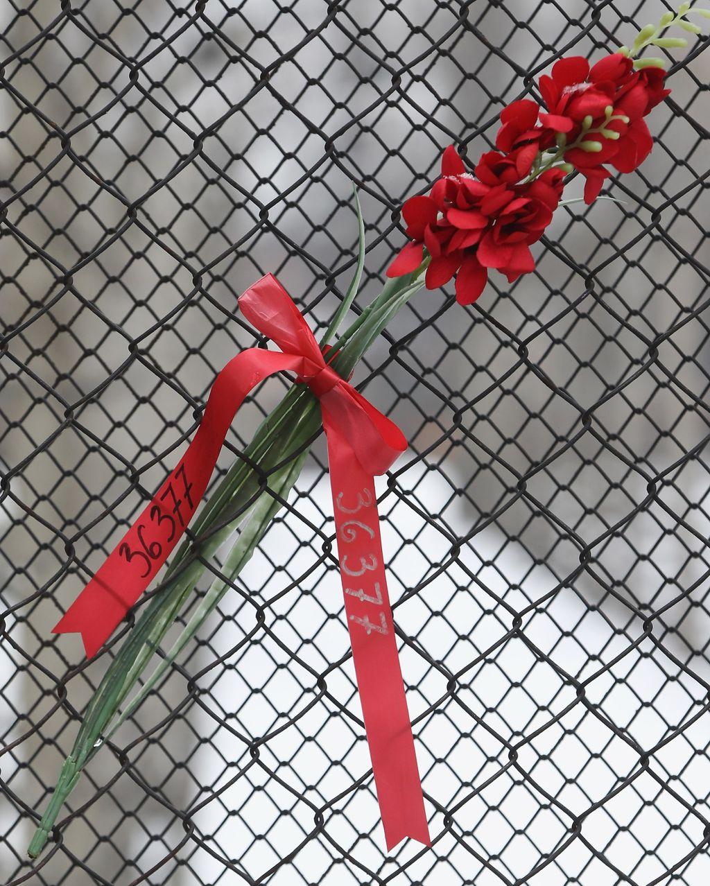 Cvijet na ogradi nekadašnjeg koncentracionog logora Auschwitz
