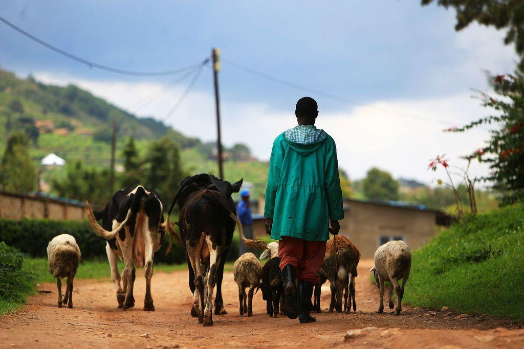 Ruanda - 10