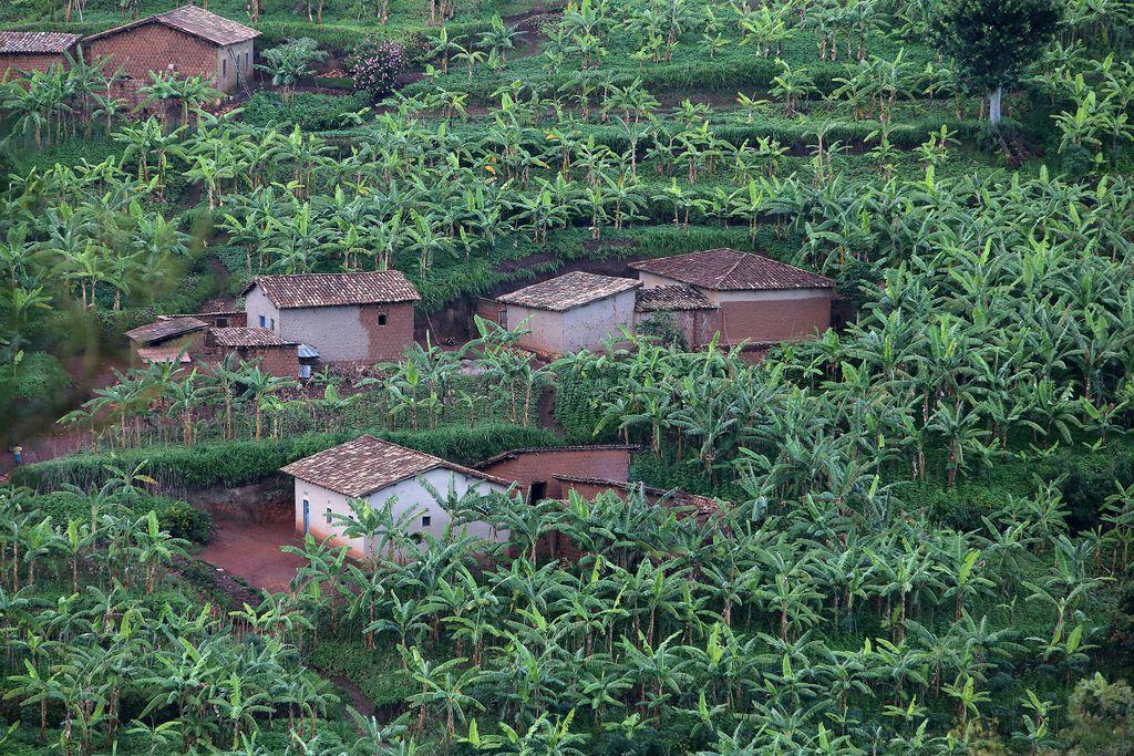 Ruanda - 49