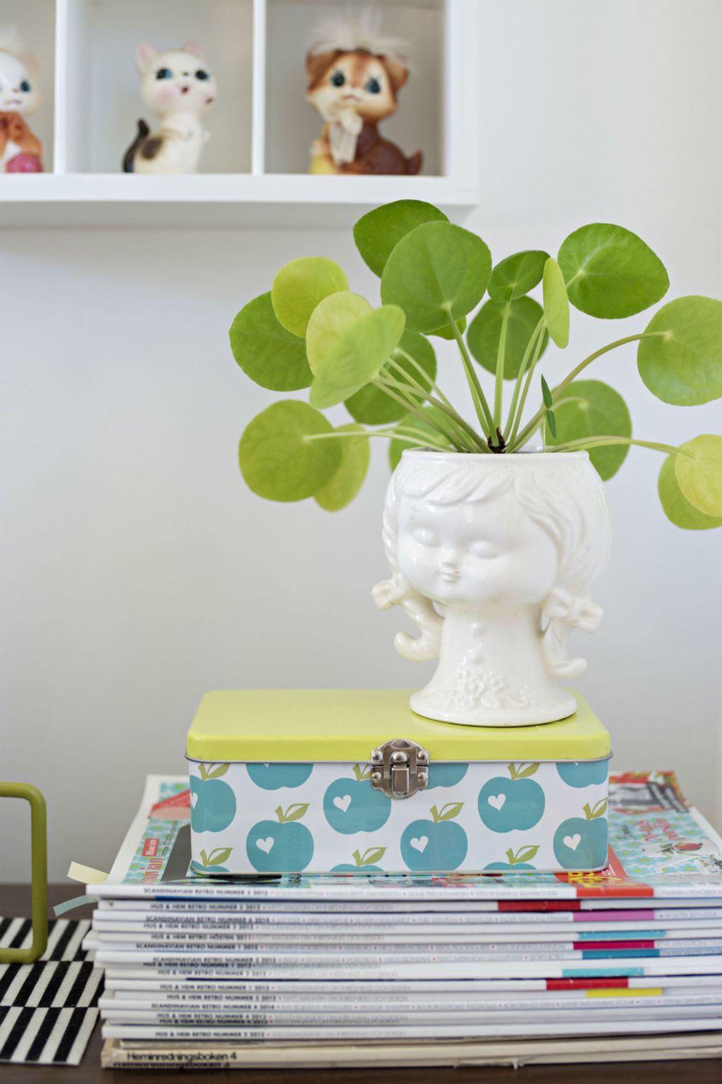 Pilea peperomioides (Kineski dolar) je biljka koja privlači energiju bogatstva i blagostanja - 4