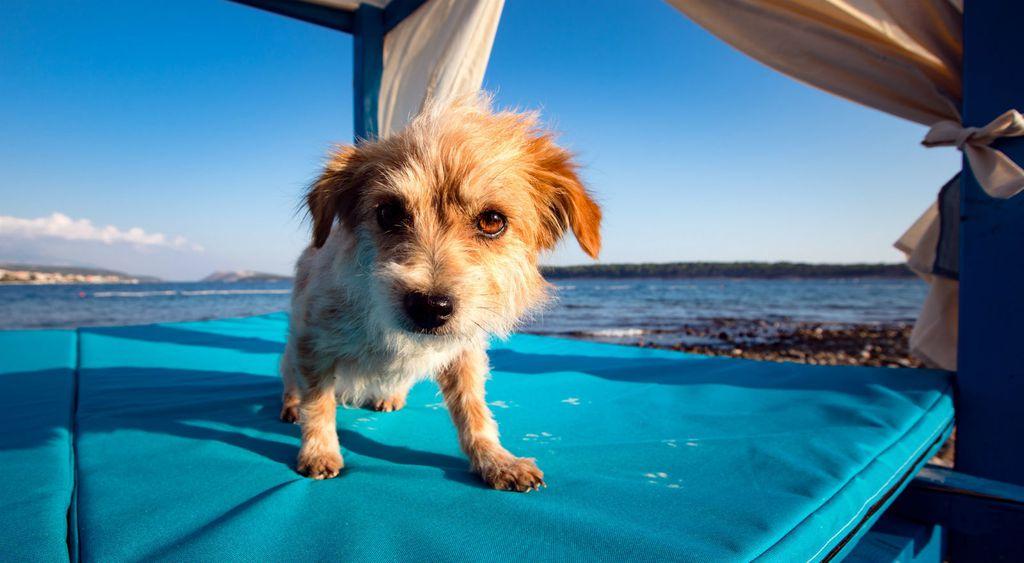 Monty\'s Dog Beach & Bar - 5