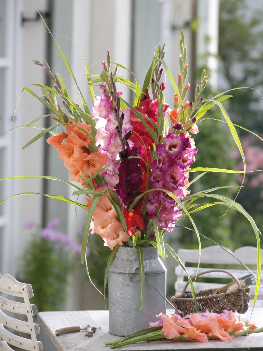 Gladiole u vazi mogu izdržati i duže od tjedan dana