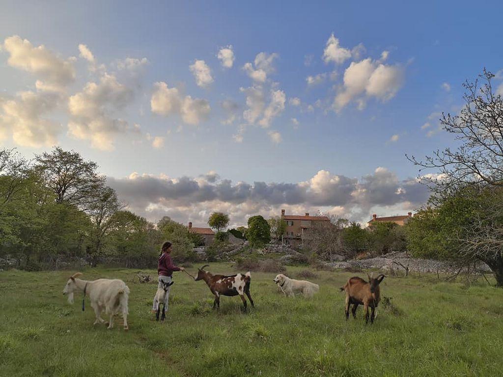 Art Farm Filozići, Cres - 8