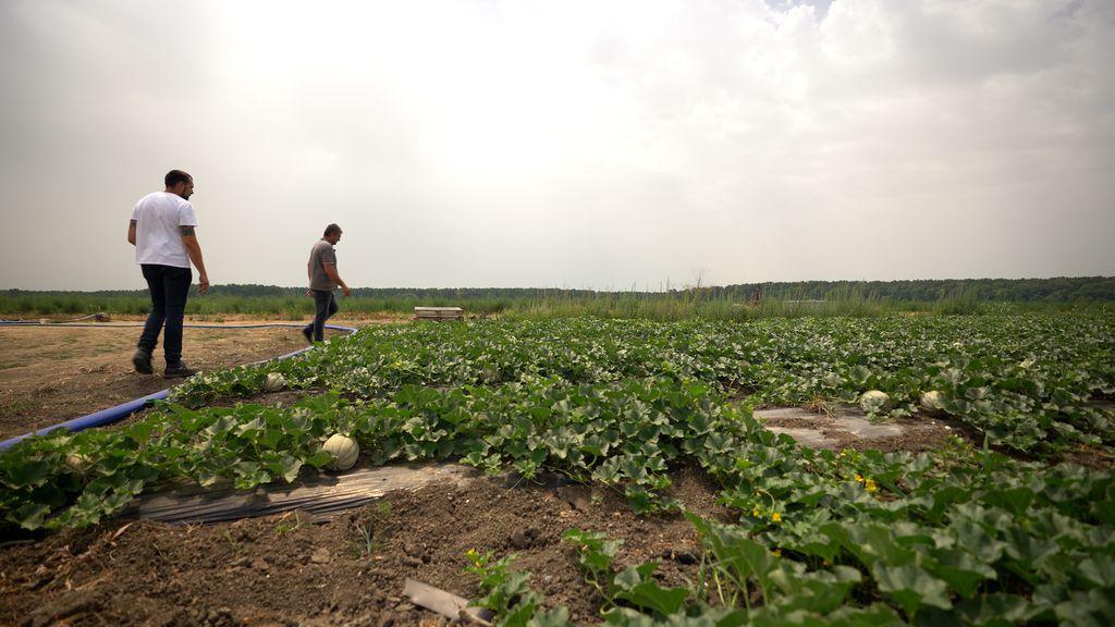 Mirko Bošković otkrio nekoliko pokazatelja koji će nam otkriti zrelu lubenicu