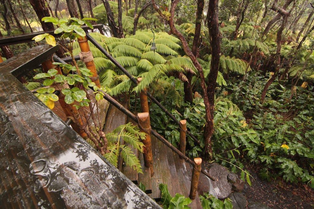 Prekrasna priroda okružuje ovu kućicu na stablu