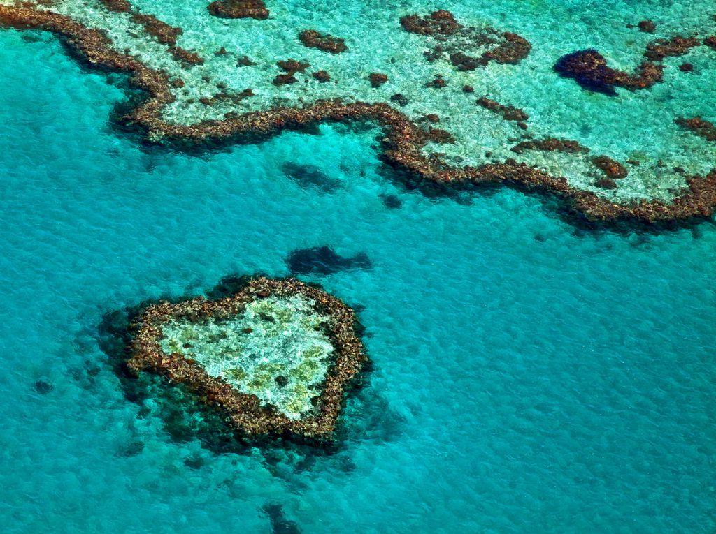 Veliki koraljni greben - 4