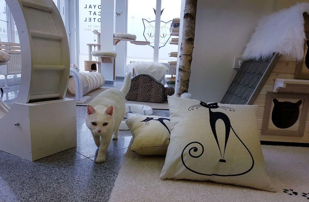 Prvi hotel za mačke u Hrvatskoj otvoren je u Dugom Selu - 6