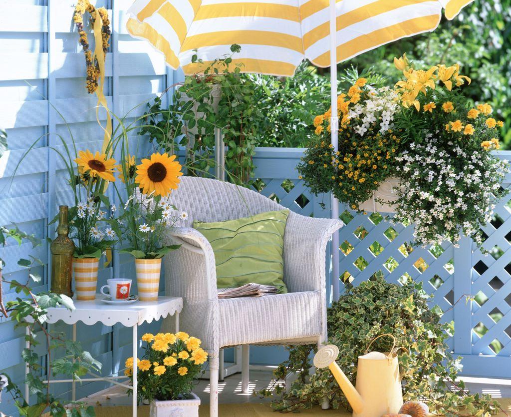 Ljetni cvijet bakopa divan je izbor za uređenje balkona - 7