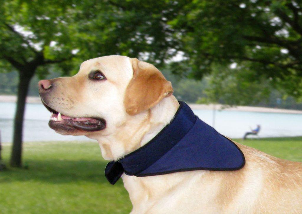 Psi su podložni toplinskom udaru pa ih je potrebno rashladiti