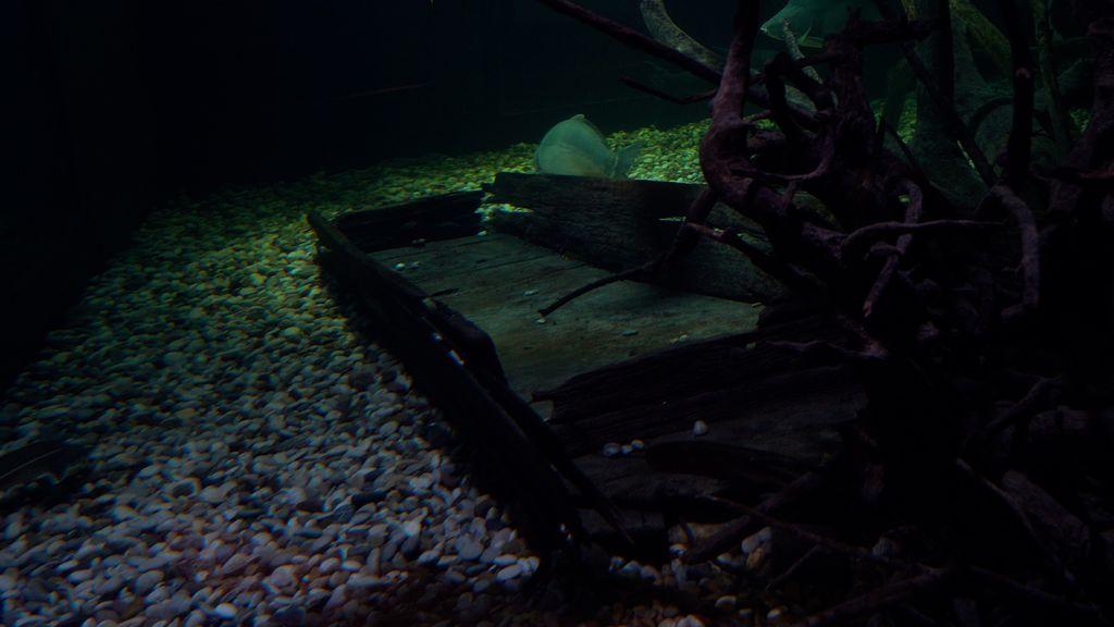 Biotopski akvariji imaju osigurane uvjete kao i u prirodnom staništu