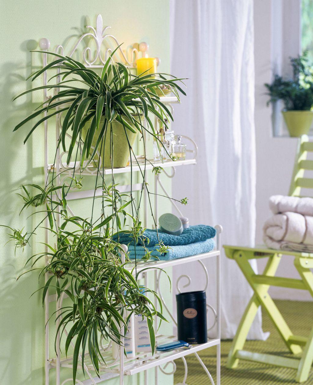 Zeleni ljiljan biljka je koju je lako održavati