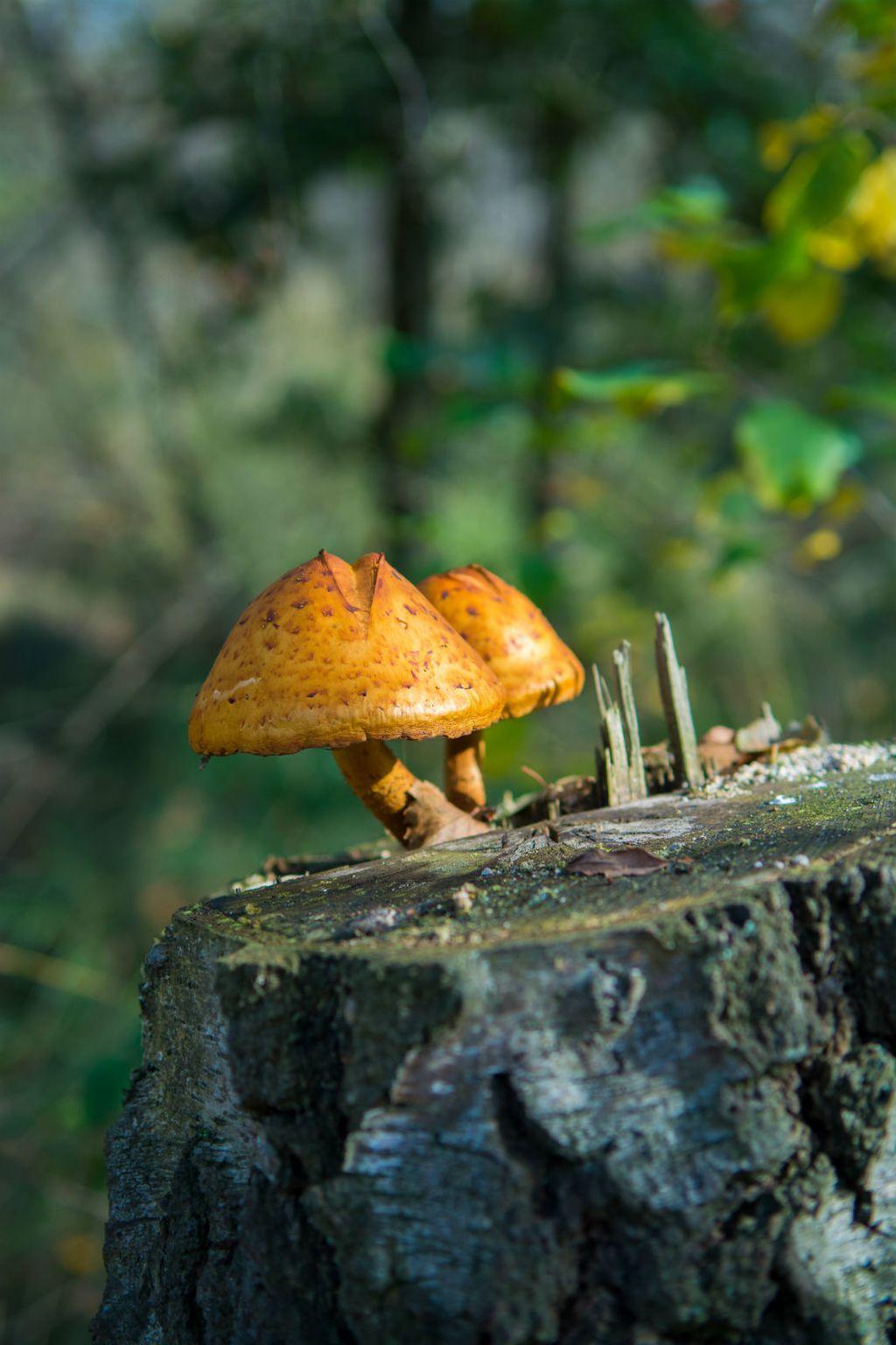 Ne berite gljive ako niste stručnjak za ovo područje