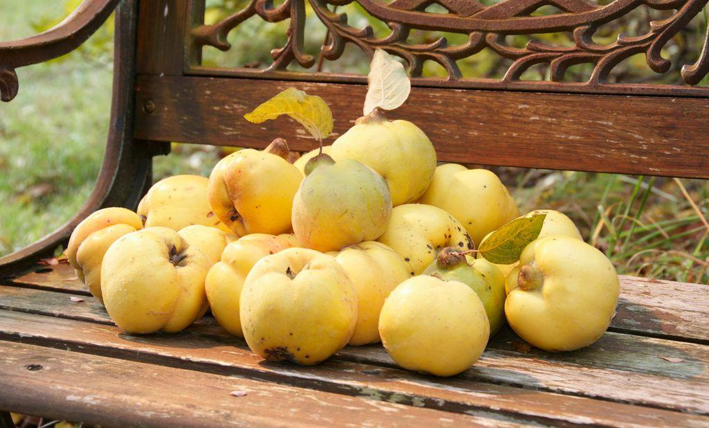 Dunja - mirisna jesenska voćka
