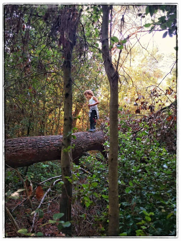 Šuma je idealan poligon za razvoj vještina