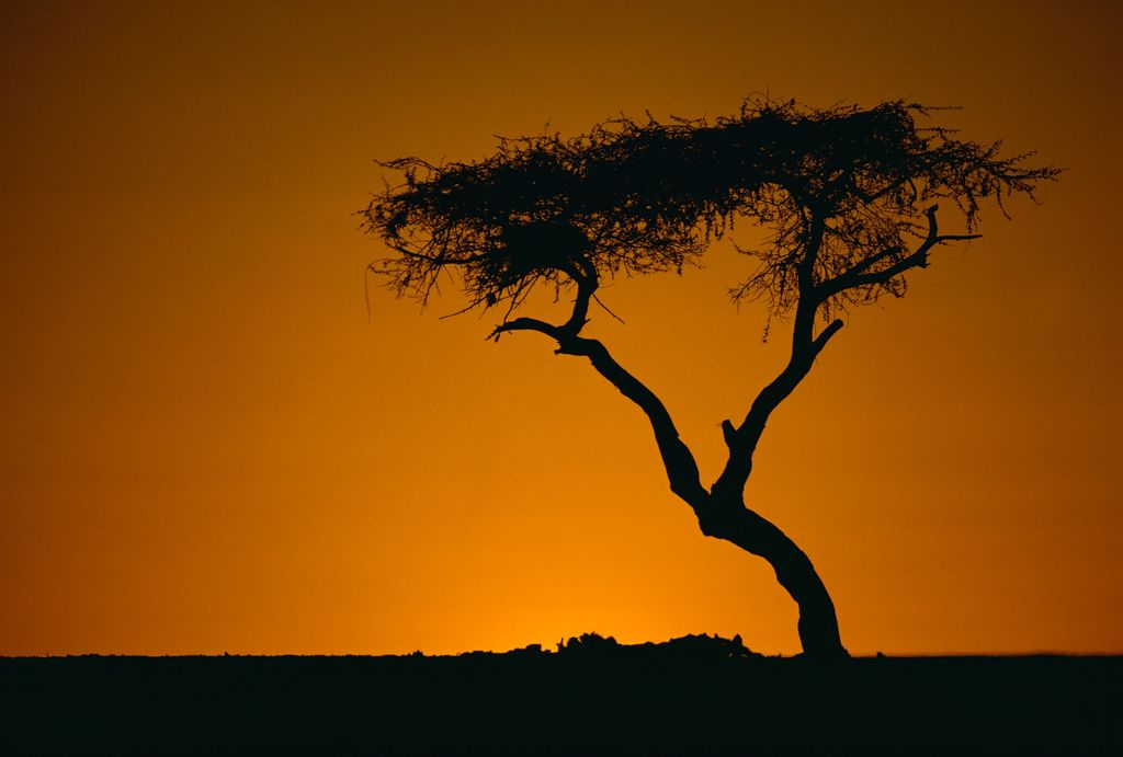 Drvo Tenere, Niger - 2