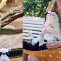 Slatke životinje (Foto: klyker.com)