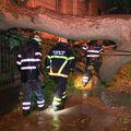 Vatrogasci režu granu u Karlovcu nakon nevremena (Foto: Dnevnik.hr) - 2