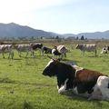 Krave