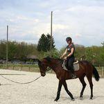Ergela konja - 12
