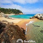 BeachRex - 6