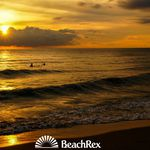 BeachRex - 9