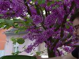 Plaćaš onoliko koliko onečistiš (Video: Dnevnik Nove TV)