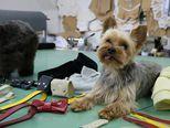 Dawg Swag - brend za odjeću i modne dodatke za pse (Foto: Anamaria Batur)