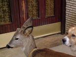 Neobično lubav psa i laneta (Video: IN Magazin)