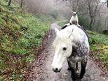 Neobičan par u šetnji (foto: profimedia)