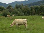 Neobrađena zemlja poljoprivrednicima (Foto: Dnevnik.hr) - 1