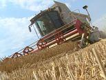 Neobrađena zemlja poljoprivrednicima (Foto: Dnevnik.hr) - 2