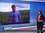 Andrija Jarak o štetama u Požegi (Video: Vijesti u 17 h)