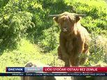 Lički stočari ostaju bez zemlje (Video: Dnevnik Nove TV)