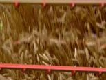 Agrokor neće smanjivati narudžbe (Video: Dnevnik nove TV)