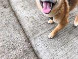 Najnasmijaniji pas na svijetu (Foto: Profimedia)