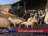 Plete čarape i zarađuje za život (Video: Dnevnik Nove TV)
