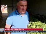 Hrvatsko svinjogojstvo (Video: Dnevnik Nove TV)
