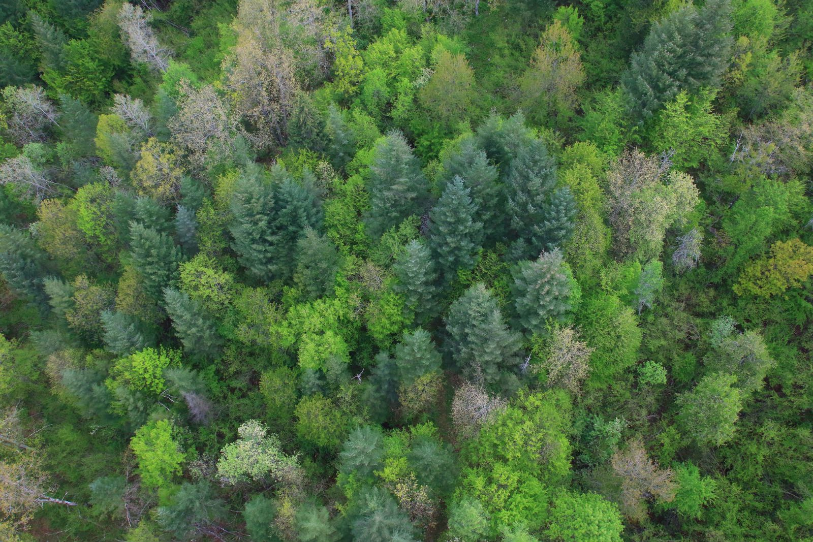 upoznavanje s temom šuma
