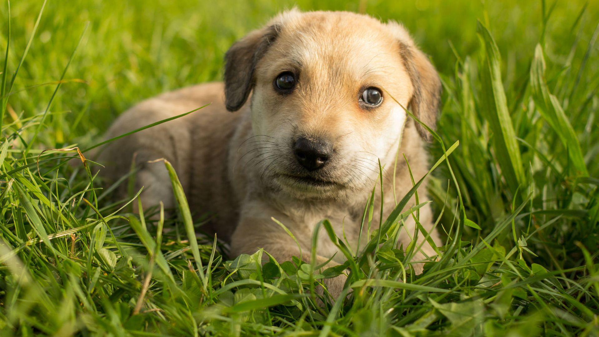 web mjesta za upoznavanje s labradorom druženje s josh i hayley