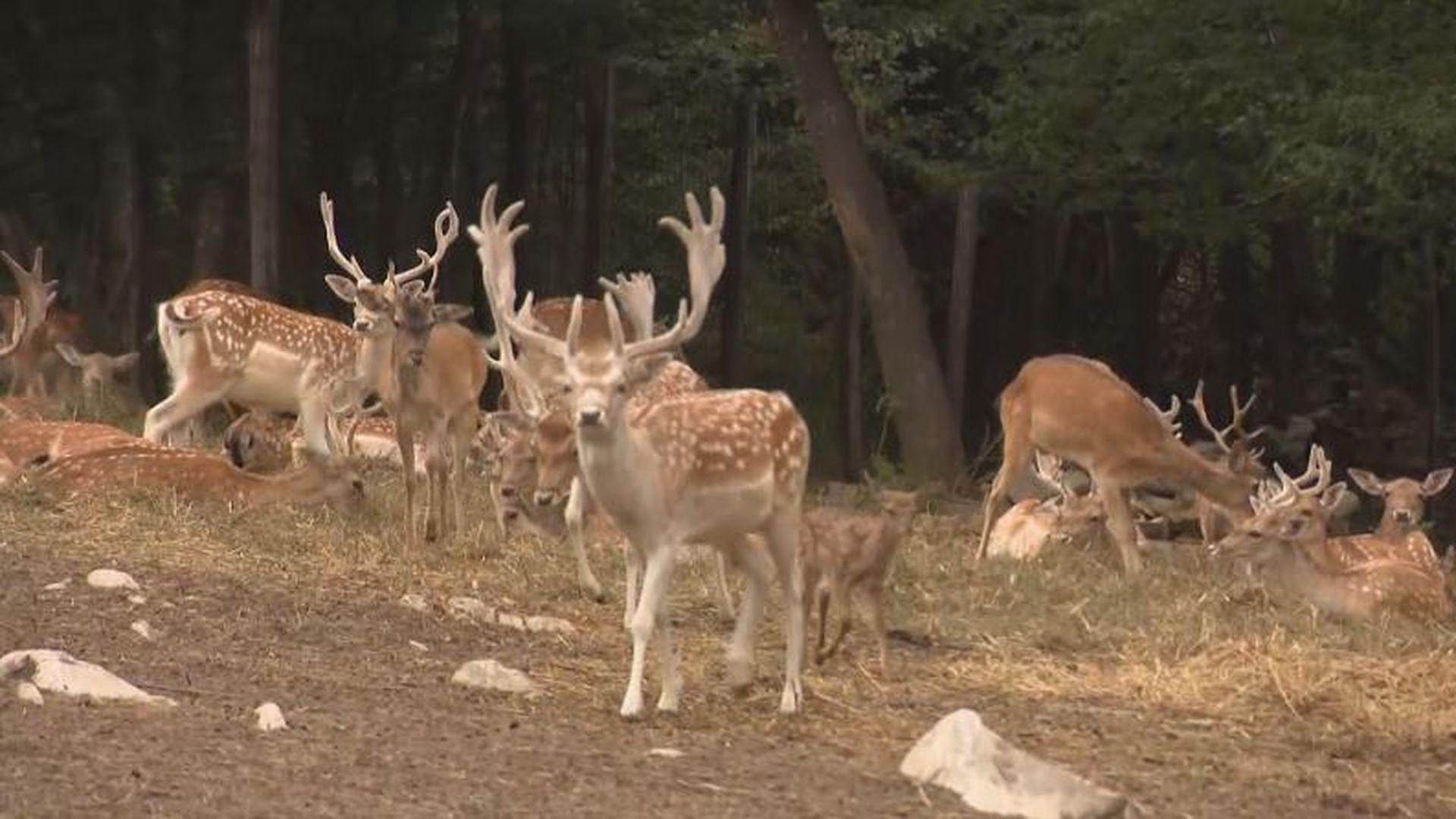 izlazak s parka jelena brzi sastanak s belmontom