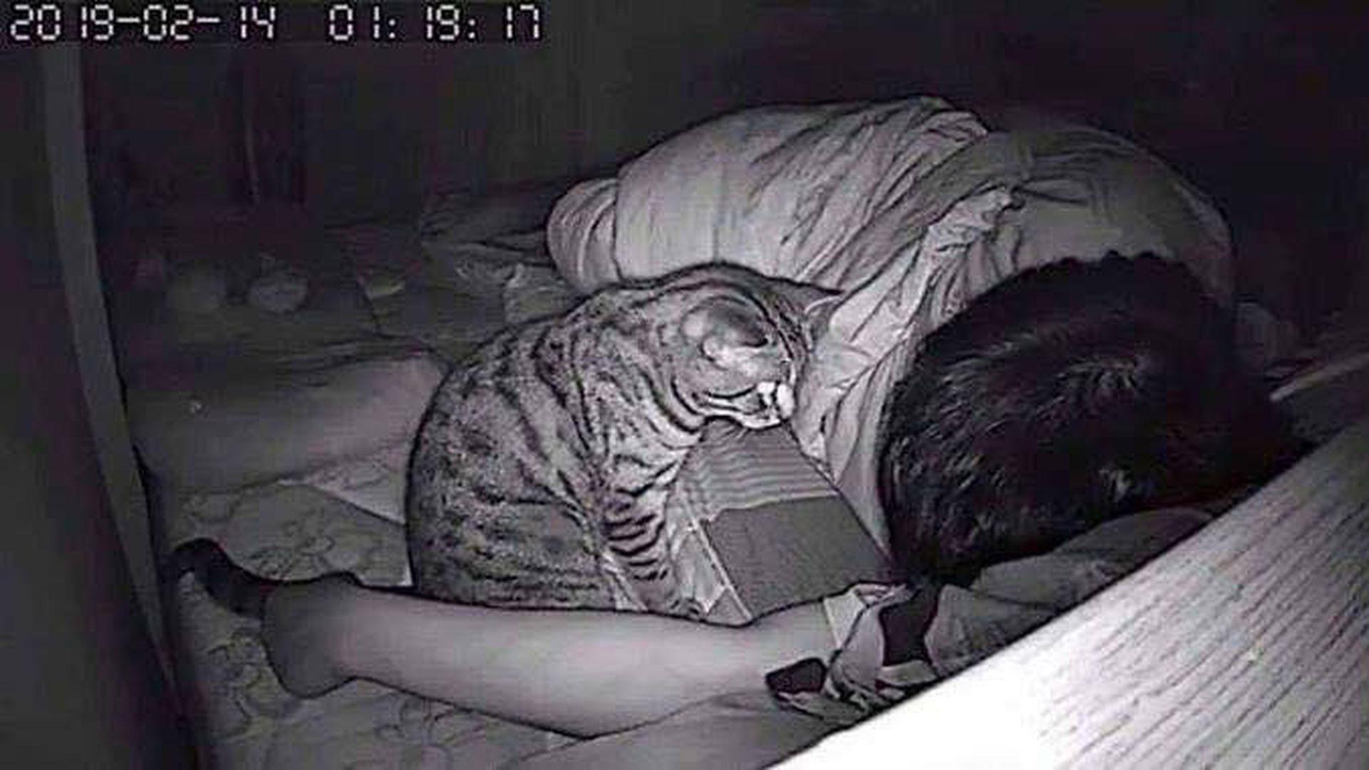 velika maca vediogay prekrasni pornići