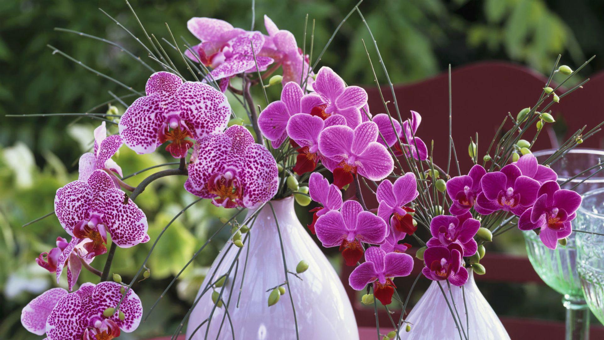 приобретения поздравления о семенах цветов ней город потный