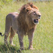 Safari u Keniji - 1