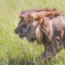 Safari u Keniji - 6