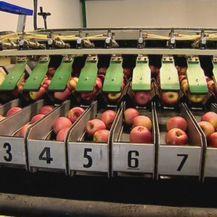Poskupjele jabuke i kruške (Foto: Dnevnik.hr) - 1